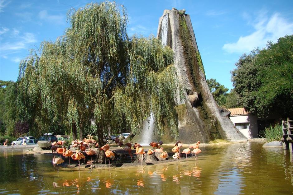 Tourisme zoo de la palmyre tourisme en charente maritime vacances royan camping le blayais - Office du tourisme de royan charente maritime ...