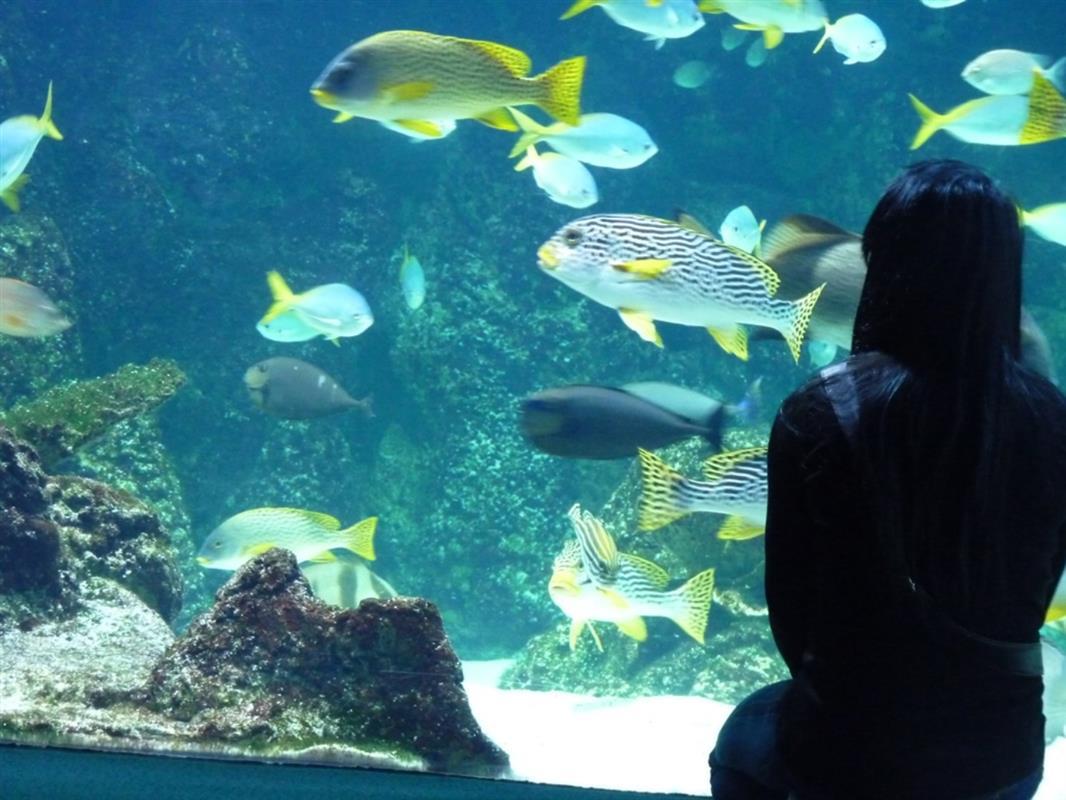 Tourisme aquarium de la rochelle tourisme en charente for Camping pres de la rochelle avec piscine